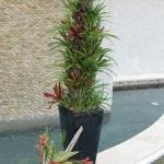 hgt12-2-bromeliad-column