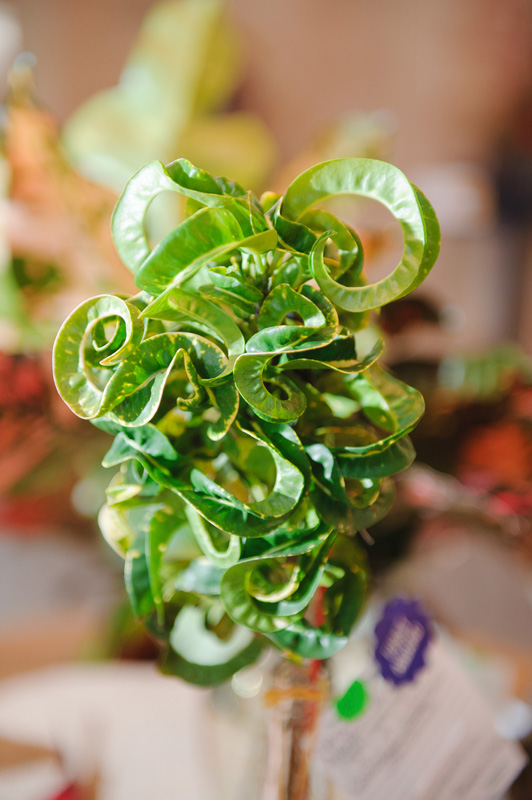G. Croton / Arboreal Award - Roberta Ross