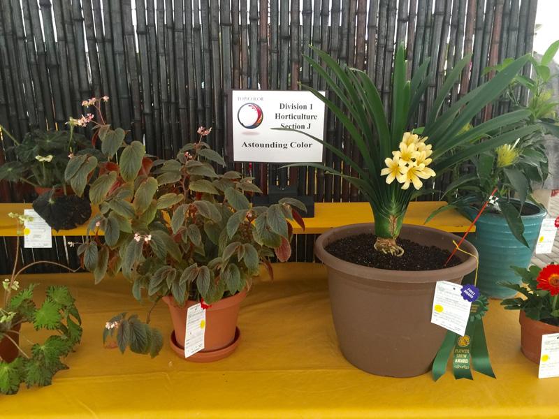 Horticulture Growers Choice Award Jill Chamberlain