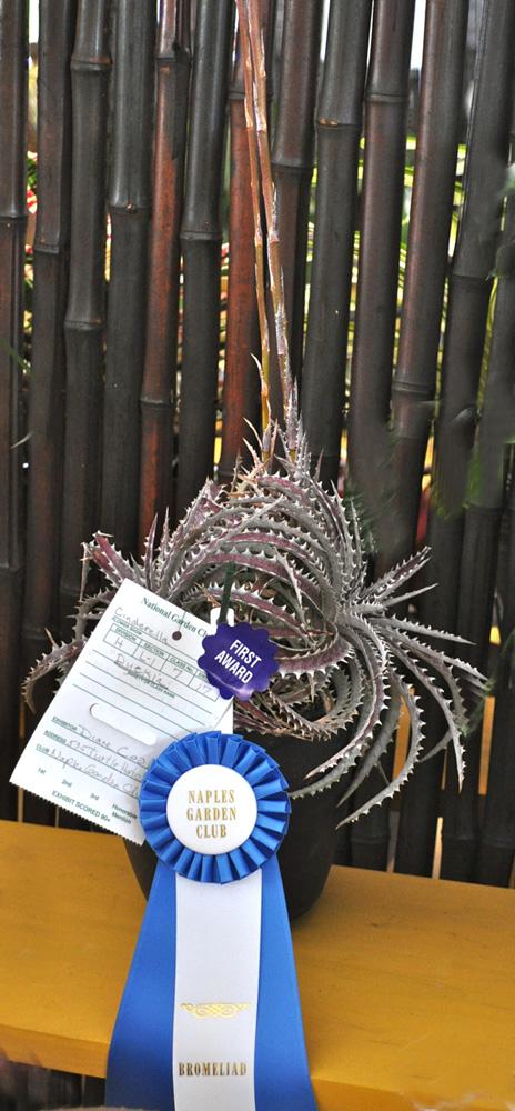 bromeliad award (1)
