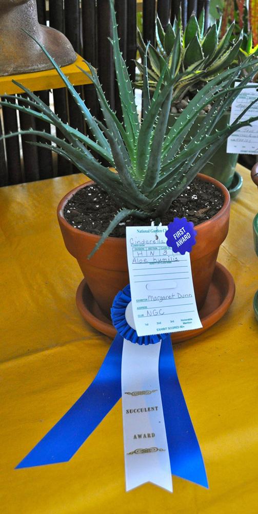 succulent award