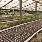 Issac Farms