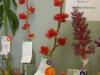 12-4-10-hort-deborah-jalbert-bromeliad-award-of-merit