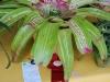 12-4-10-hort-deborah-jalbert-bromeliad-fs-school-award