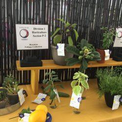 Horticulture 3