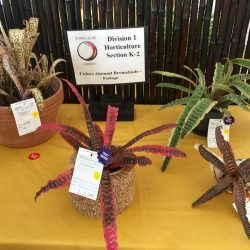 Horticulture 7
