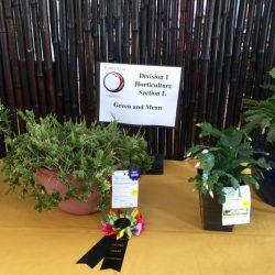 Horticulture Cactus Club Award