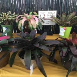 Horticulture 8