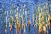 7053563-everglades-sawgrass-and-pond-in-the-florida-everglades 2