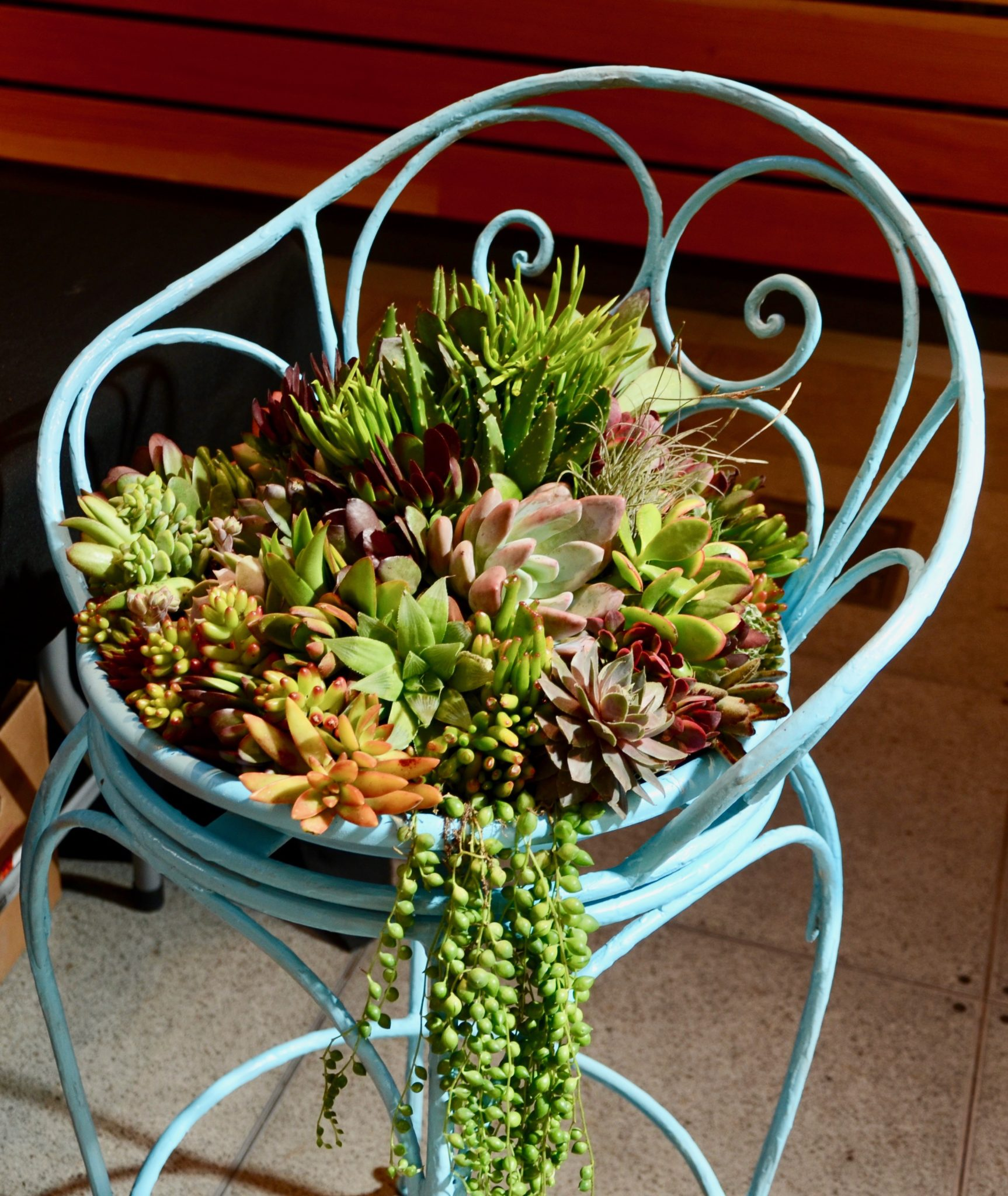 February Member Meeting: Succulents are Simple to Use