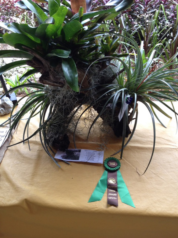 Q-2. Tillandsias & Neoregelias / Collectors Showcase - Kris Morton