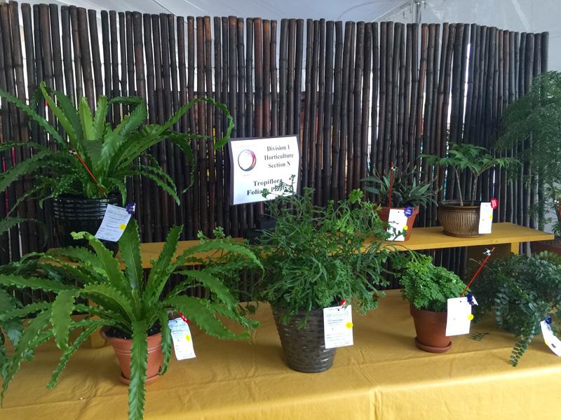 Horticulture 6
